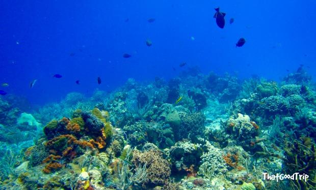 Mergulho em Cozumel, México: visibilidade incrível