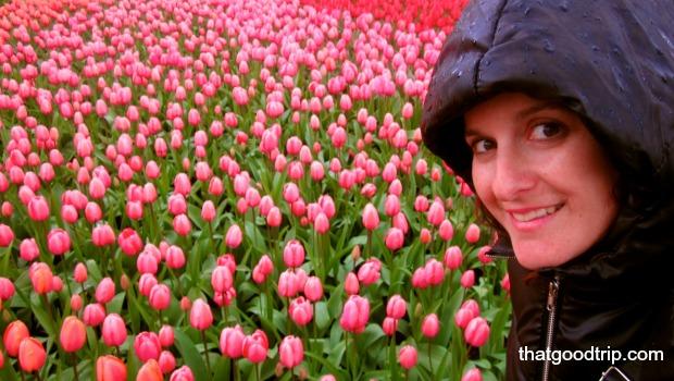 parque das tulipas na holanda: mesmo com chuva dá pra aproveitar