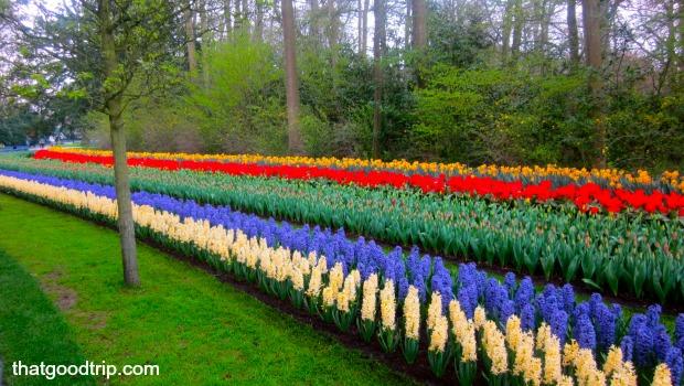 parque das tulipas na holanda: jardins perfeitos