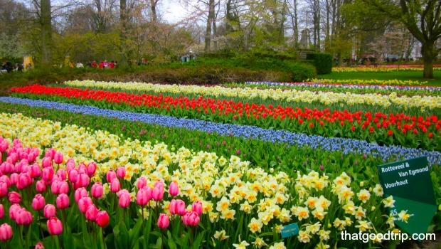 parque das tulipas na holanda: uma mais linda que a outra