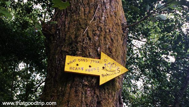 Caminho Portugues da Costa: flechas amigáveis