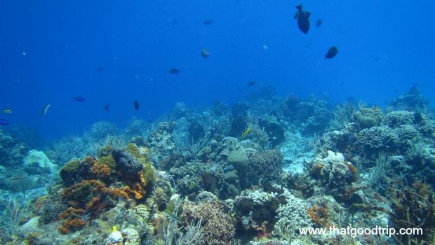 O que fazer na Riviera Maya: peixinhos em Cozumel